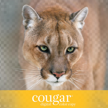 Cougar Digital Color Copy Product Image