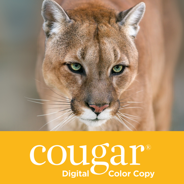 CDCC98 Cougar Digital Color Copy Product Image