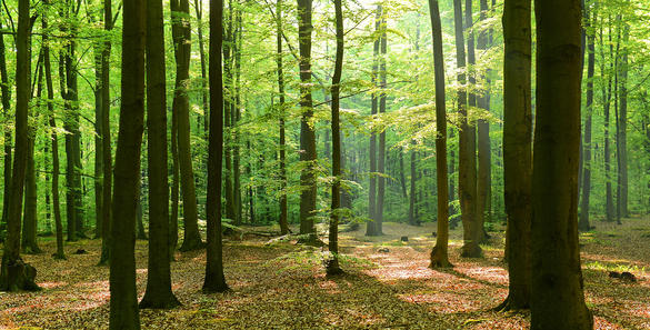 Buying FSC-Certified Paper Helps Protect Our Forests