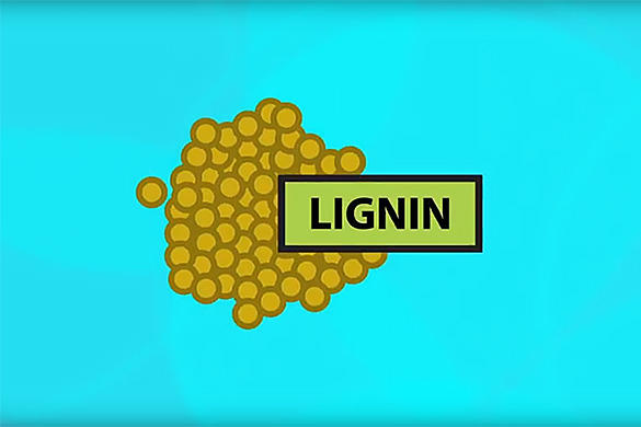 Lignin video featured