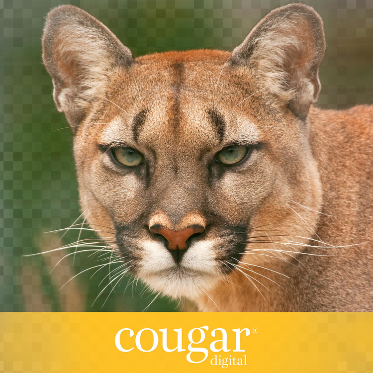 Cougar Digital Product Image